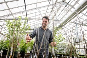 Nathan Wojtyna looks over grafted Aronia Mitschurinii plants at the Floriculture Greenhouse on May 1, 2015. This project was funded by an Idea Grant. (Peter Morenus/UConn Photo)